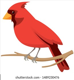 vector image of Northern Cardinal bird also known as red bird or just cardinal