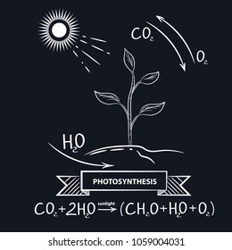 Vector image of the process of photosynthesis