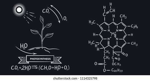 Vector image of the process of photosynthesis. Structural formula of plant chlorophyll. Vector illustration.