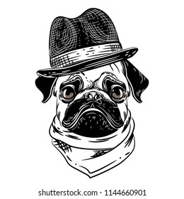 Vector image of a pug in a hat and scarf. T shirt design