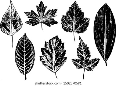 Vector image - set of ink prints of natural leaves on white background