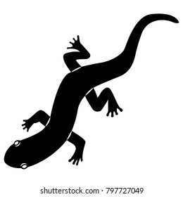 Vector image of silhouette of a lizard of salamanders on a white background