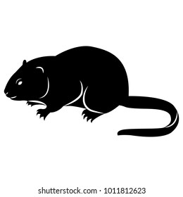 Vector image of silhouette of muskrat on a white background