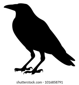 Vector image of a silhouette of a raven on a white background