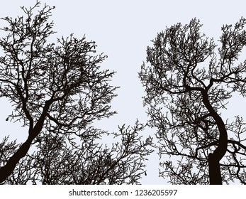 Vector image of silhouettes of deciduous trees in winter