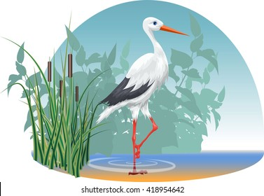 Vector image of a stork, who goes in the water on the background of reeds.