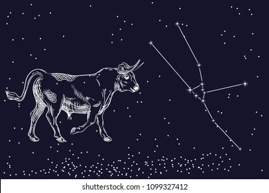 Vector Image Of A Taurus And The Constellation Of Taurus The Zodiacal Constellation