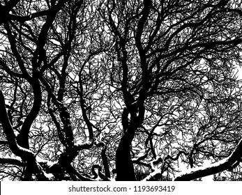 Vector image of the tree branches in winter