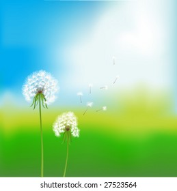 vector image. two dandelions over blurred summer background