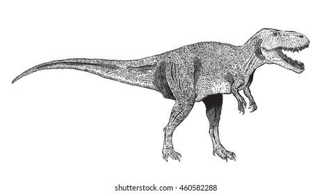 vector image of Tyrannosaurus Rex, drawn in ink