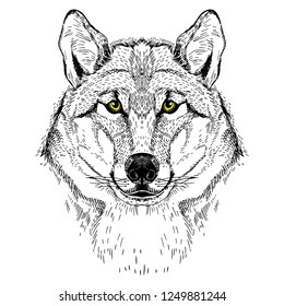Vector image of a wolf. Tattoo sketch. T-shirt design