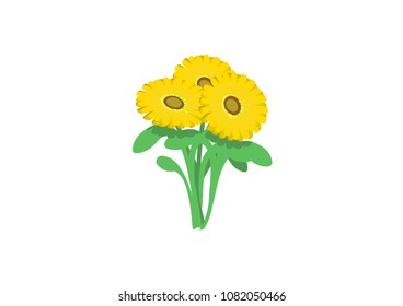 Vector image of yellow flowers