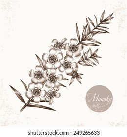 Vector images of medicinal plants. Biological additives are. Healthy lifestyle. Manuka.