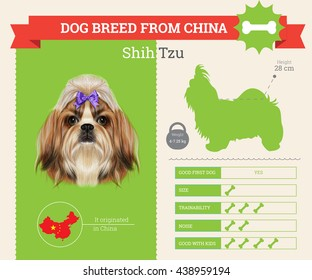 Vector info graphic of Shih Tzu Dog breed. This dog breed from China