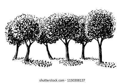 Vector ink drawing of a pruned tree group