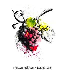 Vector ink drawn branch of grapes on red watercolor blots. Engraving food illustration for print, menu, vine card, wrapping and other art design in sketch style.  Elements are isolated.
