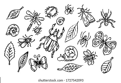 Vector insects and leaves set, outline collection of bugs, snails and leaves, black line art isolated on white background