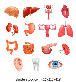 Vector internal organs icon set