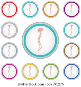 Vector internet button set with spinal cord sign isolated on a white background