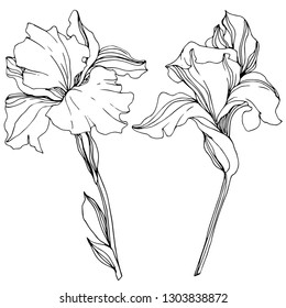 Vector Iris floral botanical flower. Wild spring leaf wildflower isolated. Black and white engraved ink art. Isolated irises illustration element.