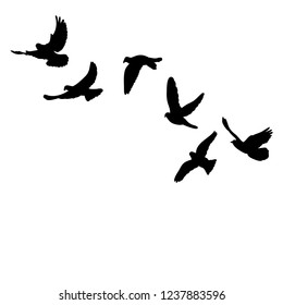 vector isolated black silhouette of pigeons flying on a white background