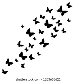vector isolated, butterflies flying, background