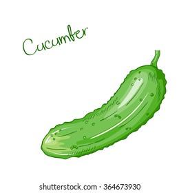 vector isolated cartoon fresh hand drawn pattypan cucumber
