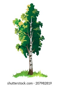 Vector isolated colorful birch tree