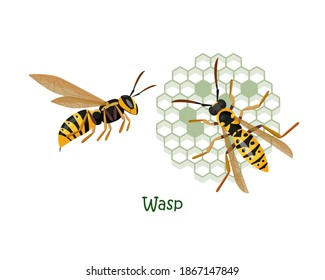 Vector isolated colorful illustration of two wasps. Wasp top view on a vespiary and wasp side view.