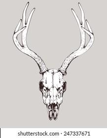 vector isolated deer skull