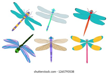 vector, isolated, dragonfly, insect, set