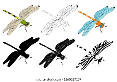 vector, isolated, dragonfly, set of silhouettes and sketches, collection
