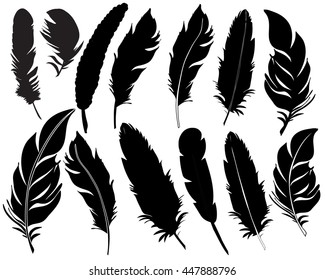 vector, isolated feathers silhouette
