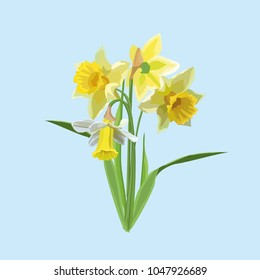 vector isolated flowers narcissi