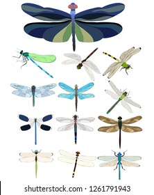 vector, isolated, flying dragonfly, insect