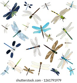 vector, isolated, flying dragonfly, insect, background