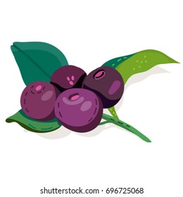 Vector isolated illustration. Acai berries.