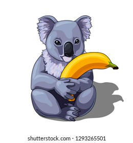 Vector isolated illustration of a cute coala holding banana