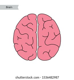 Vector isolated illustration of human brain anatomy: cerebrum and cerebellum. Brain structure Medical infographics for poster, educational, science and medical use.