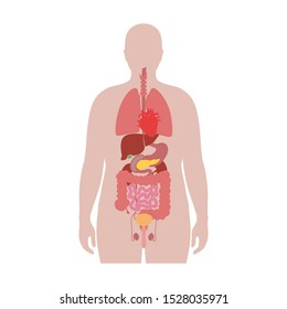 Vector isolated illustration of human internal organs in obese male body. Stomach, liver, intestine, bladder, lung, uterus, spine, pancreas, kidney, heart, bladder icon. Medical poster