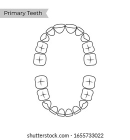 Vector isolated illustration of primary temporary teeth dentition anatomy. Baby human upper and lower jaw. Orthodontist concept. Tooth icon. Dentist, clinic, stomatology flat sign, symbol.