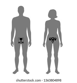 Vector isolated illustration of reproductive system in woman and man silhouette. Isolated black uterus, cervix, ovary, fallopian tube, testis, scrotum, vessels icon in body.