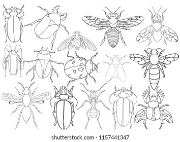 vector, isolated, insect, beetles book coloring, set