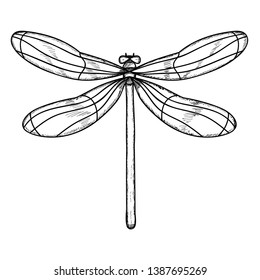 vector isolated insect dragonfly with lines