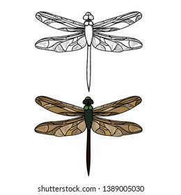 vector, isolated, insect dragonfly, sketch, lines