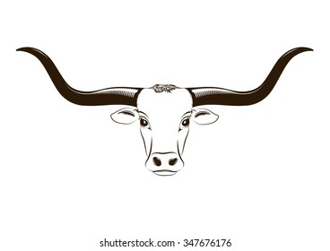 Vector isolated Longhorn head on white background