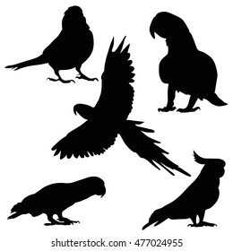 vector, isolated on white background set of silhouettes of a parrot