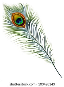 Vector isolated peacock feather. EPS 10