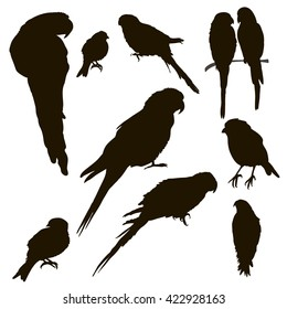 vector , isolated, set silhouette of birds, parrots