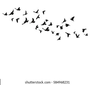 vector isolated silhouette of a bird flying